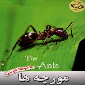 مستند دیدنی مورچه ها
