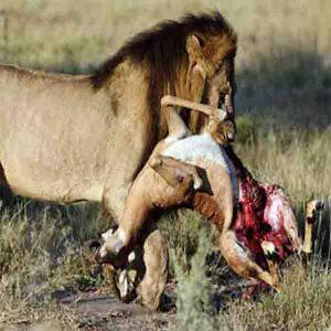 مستند مرگبار ترین حیوانات